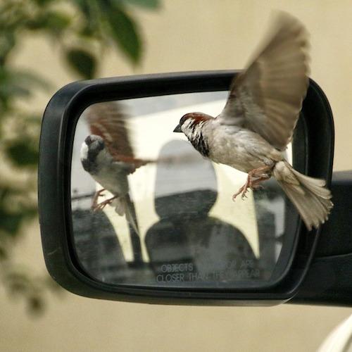 Sparrow & Mirror